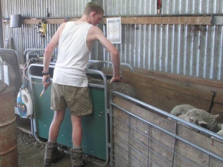 Condition scoring merino ewes, Glenaan Station